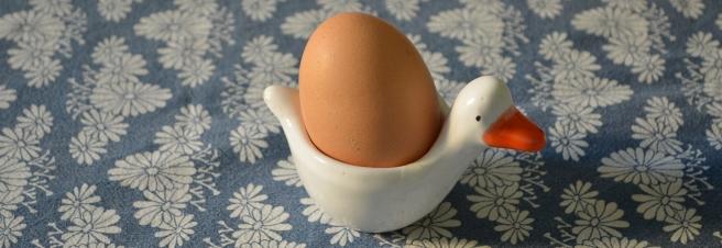 uova galline felici